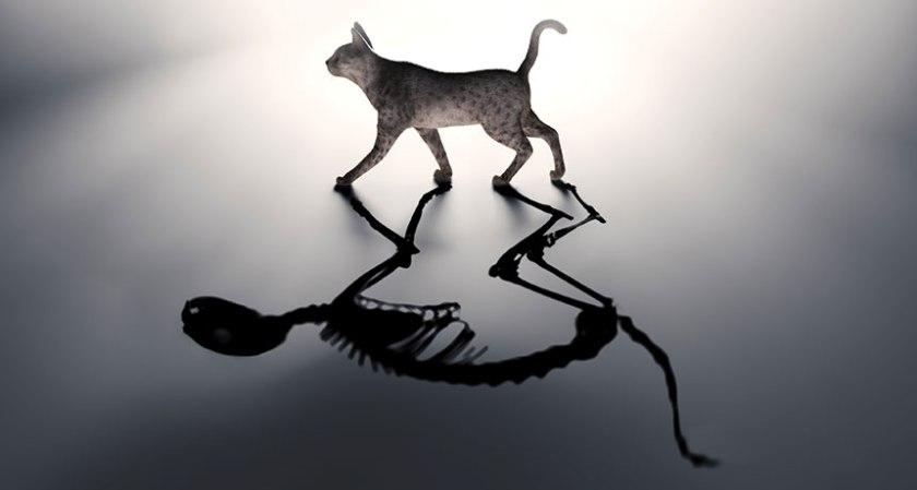052616_ec_schrodinger-cat
